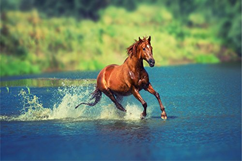 Pferd Wasser Wiese Tier XXL Wandbild Foto Poster P0156 Größe 90 cm x 60 cm, Größe 90 cm x 60 cm