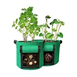 Sygnifique 10 Gallon Pack of 2 Potato Plant Garden Grow Bags to Grow Vegetable Breathable ...