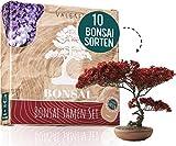 10 Bonsai Samen aus 5 Kontinenten I Exotische Baum Samen für deinen einzigartigen Bonsai Baum I...