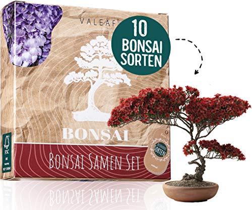 valeaf -  10 Bonsai Samen aus