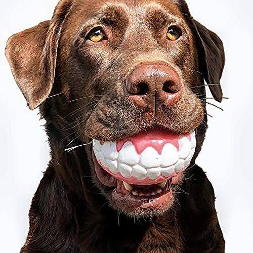 CHEECH! Share a Smile with The Incredible Fetch Ball for Medium to Large Dogs