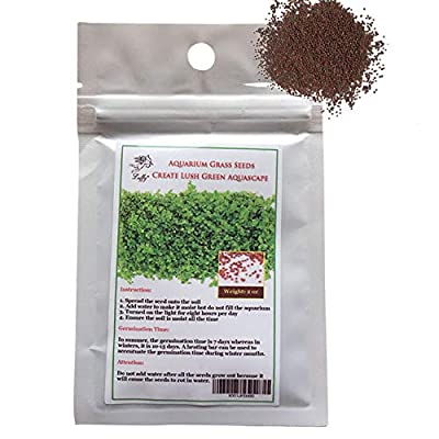 SunGrow Aquarium Temple Plant Seeds, 0.4 Ounce, Improves Water Color and Quality, Easy to Grow with Minimal Maintenance, Vibrant Green Tropical Hygrophila Plant for Freshwater Fish Tanks, 1 Pack