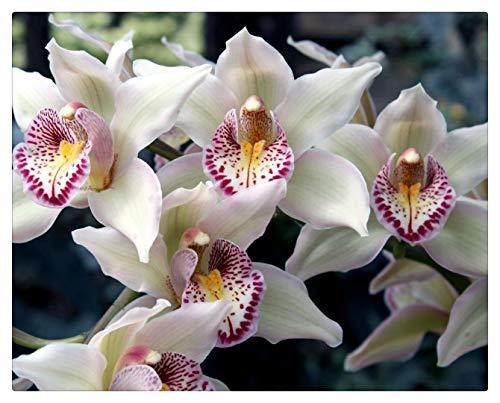 QTDZSWGS Pintar por Numeros Adultos Pintura Al Óleo sobre Lienzo Niños con Pinceles Y Pigmento Acrílico De 40X50Cm (Sin Marco) - Orquídeas Flores Manchadas Exóticas