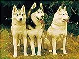IOIUG Pintura por números Set Art Husky Dog For Adult Child Senior Level DIY-No Frame-40x50cm