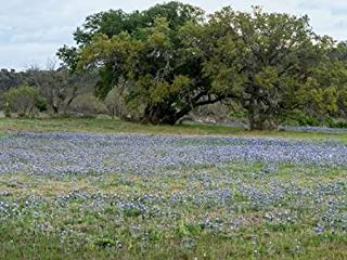 Posterazzi Poster Print Collection Field of Bluebonnets in the Texas Hill Country Near Burnet Carol Highsmith, (9 x 12), Multicolored