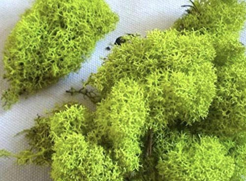 biotopeaquatics SB Dried Reindeer Moss - LIME APPLE GREEN perfect for air plants crafts tillandsia