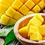 マンゴー 冷凍 無添加 1kg 500g×2 カット済み 糖度15度以上 ベトナム産 カッチュー種