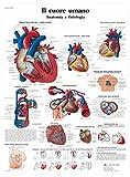 3B Scientific VR4334UU il Cuore Umano, Anatomia e Fisiologia