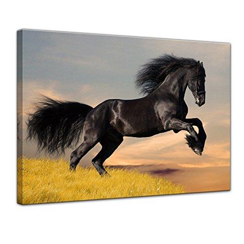 Wandbild Friese - 80x60 cm Bilder als Leinwanddruck Fotoleinwand Tierbild Pferd - Natur Langhaarpferd im Sprung