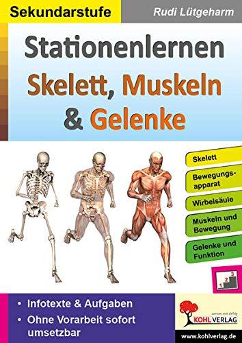 Stationenlernen Skelette, Muskeln & Gelenke: Übersichtliche Aufgabenkarten für die Sekundarstufe