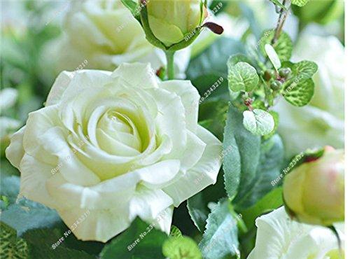 Exotique Miniature Bonsai Fleur Rose Rosas Graine Bricolage jardin et maison embellissant de purification d'air 110 Pcs/Sac 21