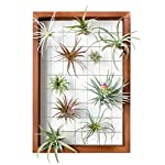 Mkono Air Plant Frame Tillandsia Wall Display, 7 7/8 Inch, 16 Inch 8 A wonderful way to display your tillandsias. This frame allows air and light to pass through. With hooks at the back, easy to hang anywhere, wall, windows or outdoor.