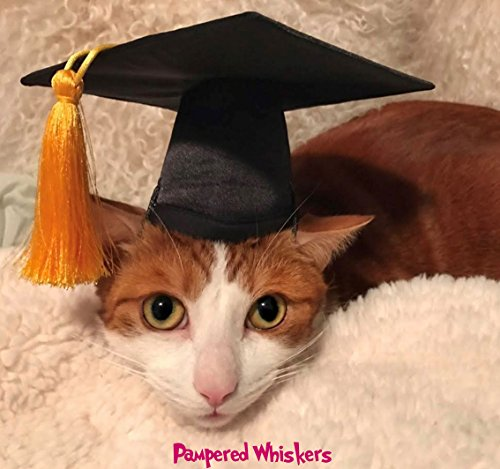 Pampered Whiskers Graduation Cap for Dogs and Cats - Your Choice of Tassel Color (6-11' Collar Size, Gold)