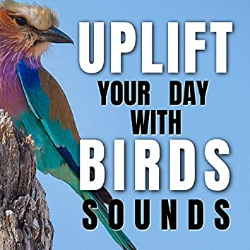 Uplift Your Day with Birds Sounds