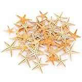 PGATU Estrella de mar de fundición de Resina Natural, Adornos de Conchas Marinas de Resina epoxi, Suministros de Acuario de micropaisaje(2-3cm-50pcs)