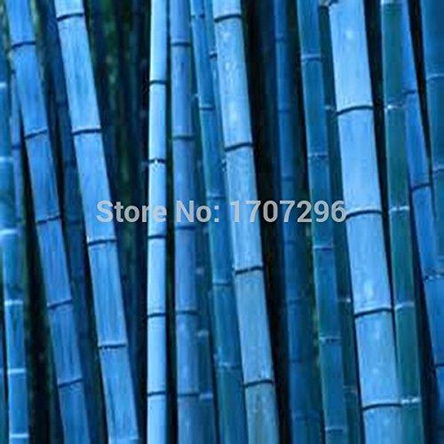 Bleu rares graines de bambou, ornement de jardin, Herb plantation - 20 pcs / lot
