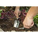 "Bend-Proof Garden Hand Small Trowel 11.8"" L x 3"" W Aluminum Rust Resistant Lightweight Ergonomic Soft TPR & PP Handle Garden Gift Little Shovel for Planting, Transplanting, Weeding, Digging #2043 10 👍 ESPECIALLY SUITABLE FOR GARDEN LOVER: The 11.8 in. long little hand trowel weights 0.3 lb with cast aluminum head is lightweight, rust-resistant, bend-proof and specially durable. Soft TPR & PP handle is gentle on your hands when holding, digging, and non slippery. White and green 2 tones color handle gives a refreshing look for spring gardening. Make the gardening work easy and interesting, you and your family will be more interested in it! 👍 HIGH QUALITY: The cast aluminum head is lightweight and can be rust-resistant, sturdy enough, specially bend-proof, not worried about this baby in the weather or bending on a rock. 👍 MAZING FUNCTIONAL: The ergo gel grip hand trowel is used forpotting up plants, digging in plants, light cultivating, etc. The trowel features an ergonomic handle design with a soft gel grip insert that cushions the hand and provides maximum comfort. Mirror polished head is easy to clean and sharp looking. The blade is made of strong aluminum for the most durability. Great for gardening in tight spaces, as well as open gardens."