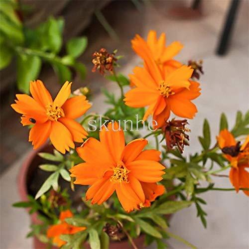 AGROBITS Bonsai printemps semant les tablettes de cosmos pour envoyer des fleurs d'engrais fleurs vert paysage jardin mer 100pcs (bo si ju): 6