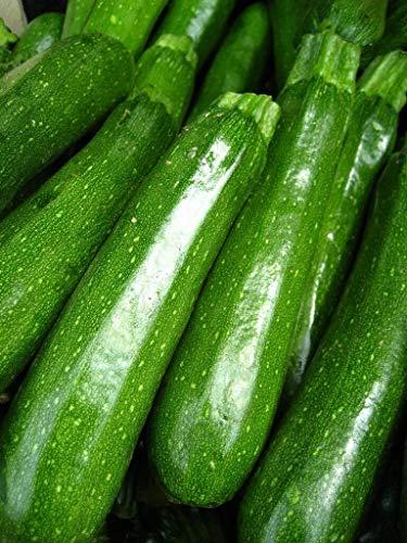 HONIC Zucchini Lajkonik - Cucurbita Pepo - 24 Samen