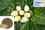 Noni Extrait Poudre, Morinda citrifolia, poudre de hochkonzentriertes (5: 1)