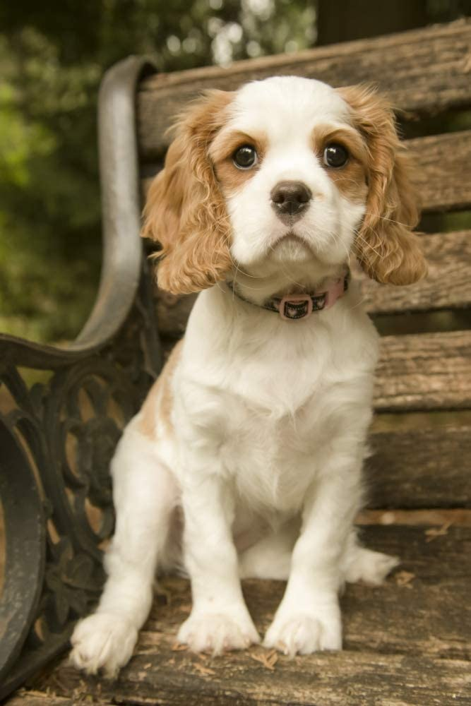 At the price Posterazzi PDDUS48JHO0606LARGE Issaquah WA. Charl Miami Mall Cavalier King