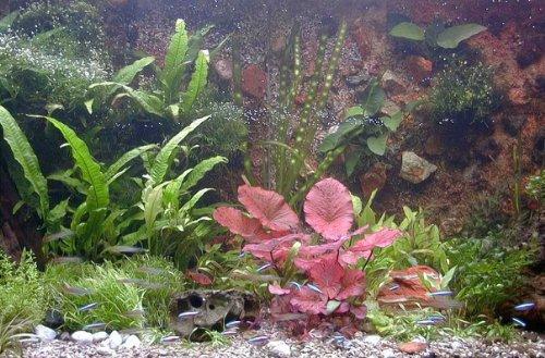 Mühlan Topartikel- 35 Aquarium Wasserpflanzen + Tigerlotus + Wasserpflanzendünger + Futter, Komplettsortiment