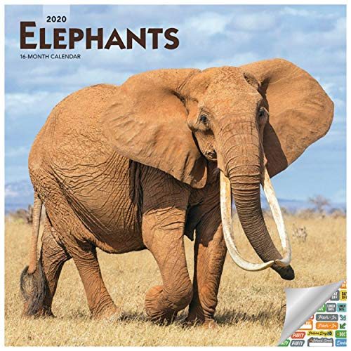 Elephant Calendar 2020 Elephant Wall Calendar with Over 100 Calendar Stickers