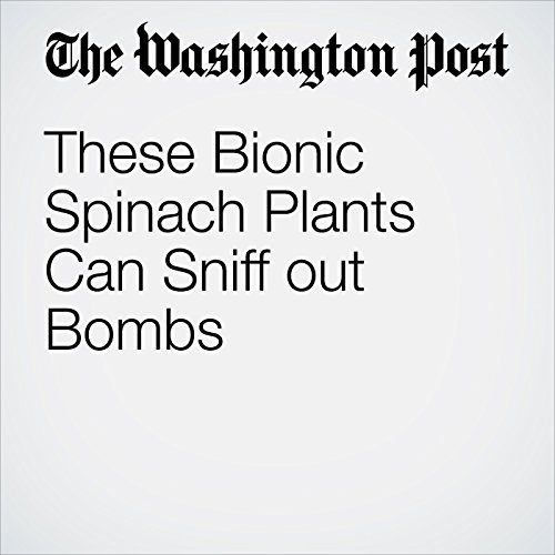 These Bionic Spinach Plants Can Sniff Out Bombs audiobook cover art