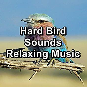 Hard Bird Sounds Relaxing Music