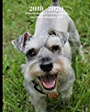 2019 - 2020 | 18 Month Weekly & Monthly Planner July 2019 to December 2020: Miniature Schnauzer Dog Breed Pets Animals Vol 67 Monthly Calendar with ... Holidays– Calendar in Review/Notes 8 x 10 in.