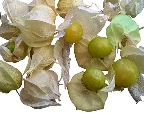 Bayern's Gemüse des Jahres 2015 **Ananaskirsche 10 Samen** Super Ertrag und Zuckersüß
