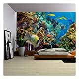 wall26 - Tropical Anthias Fish with net fire Corals on Red Sea Reef Underwater - Removable Wall Mural | Self-Adhesive Large Wallpaper - 100x144 inches
