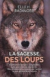 Loup Arctique Description Complète Avec Photos Instinct