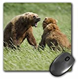3dRose LLC 8 x 8 x 0.25 Alaska Katmai NP Brown Bear Hallo Bay Paul Souders Mouse Pad (mp_87657_1)