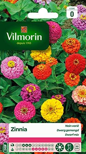 Vilmorin 5832540 Plante zinnia, Multicolore, 90 x 2 x 160 cm