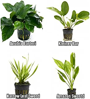 potted aquarium plants