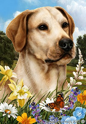 Best of Breed Labrador jaune - pavillons de jardin de fleurs d'été