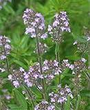 Ajedrea (Satureja Hortensis) - 200 semillas