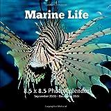 Marine Life 8.5 X 8.5 Calendar September 2020 -December 2021: Monthly Calendar with U.S./UK/ Canadian/Christian/Jewish/Muslim Holidays-Marine Life