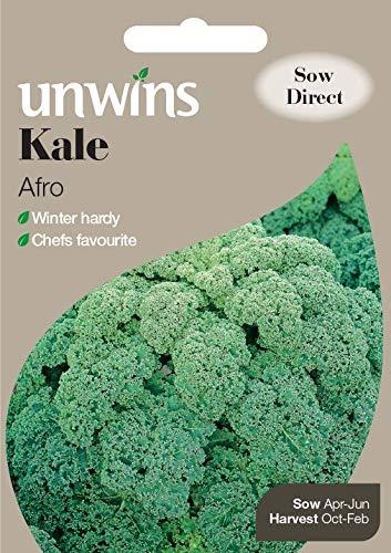 Portal Cool Unwins Pictorial Packet - Kale Afro - 100 graines