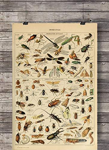 Poster Bild Insekten Käfer Nr.2 Vintage A3 ohne Rahmen