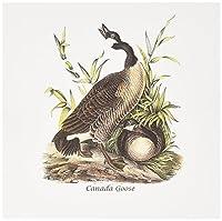 BLNジョン・ジェームズ・オーデュボンコレクション–Canada Goose byジョン・ジェームズ・オーデュボン–グリーティングカード Set of 6 Greeting Cards