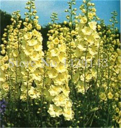 Bloom Green Co. Bonsai 100 PC mischten die bunten Rakete Rittersporn Pflanzen Consolida Delphinium Blumen flores für Gartendekoration Bonsais Planta: 5