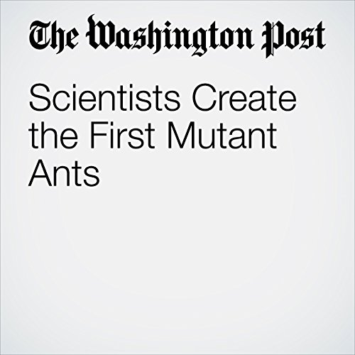 Scientists Create the First Mutant Ants copertina