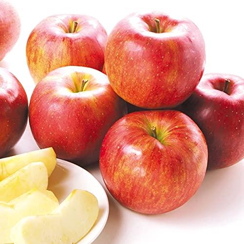 国華園 りんご 青森産 シナノスイート 10� 1箱 食品