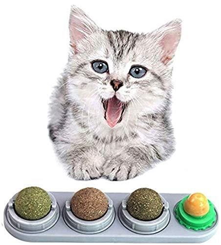 cibi nocivi per i gatti migliore guida acquisto