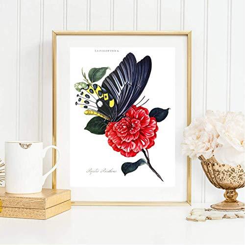 Din A4 Kunstdruck ungerahmt - Schmetterling Blume Pfingstrose schwarz rot Schautafel Natur Shabby Chic, Gemälde, Deko, Geschenk Druck Poster Bild