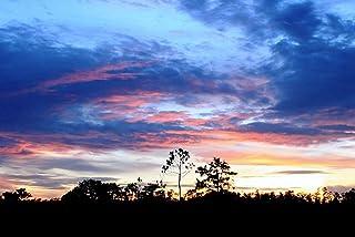 B1 ポスター(木は、地平線太陽衰退空雲パターンを概説します) キャンバスフォトアートプリントポスター 写真の壁の装飾 B1 (707mm×1000mm)