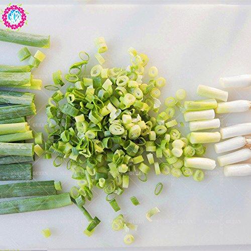 11.11 Big Promotion! 100 pcs/lot de graines d'oignons verts de graines de légumes verts en pot dans le jardin et la maison des graines de plantes d'herbes fraîches annuelle