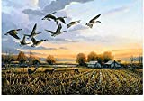 ygghj Ienzo De Bricolaje Regalo De Pintura Al Óleo para Adultos Niños Pintura por Número Kits Decoraciones para El Hogar-Ilustración De Pato De Granja 16 * 20 Pulgadas